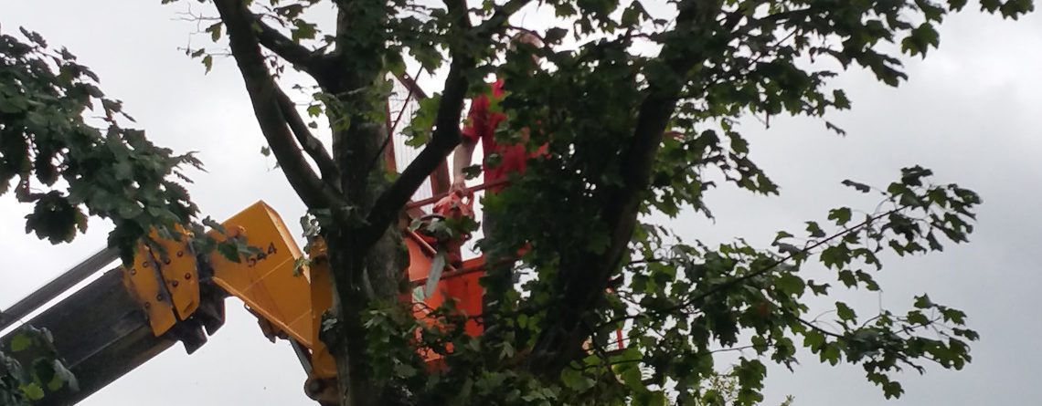 Local Gomersal Tree Services